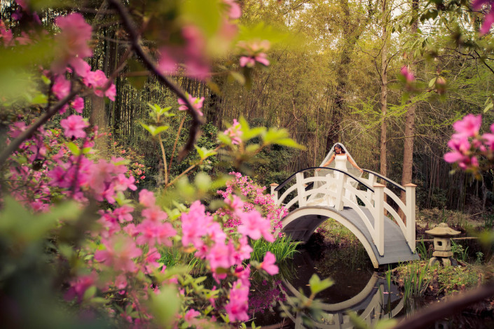 Bridge and Azaleas