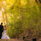 weddings at Old Santee Canal Park