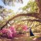 Under the Oaks at Magnolia Plantation
