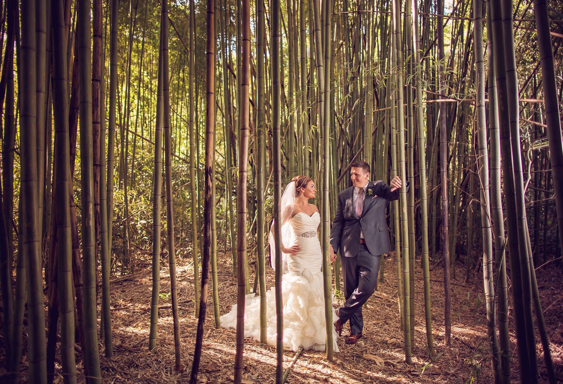Magnolia Plantation Bamboo