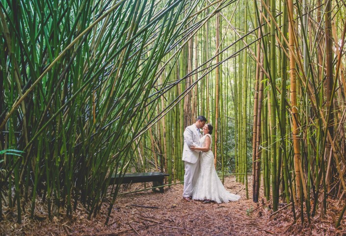 Bamboo at Magnolia Plantation