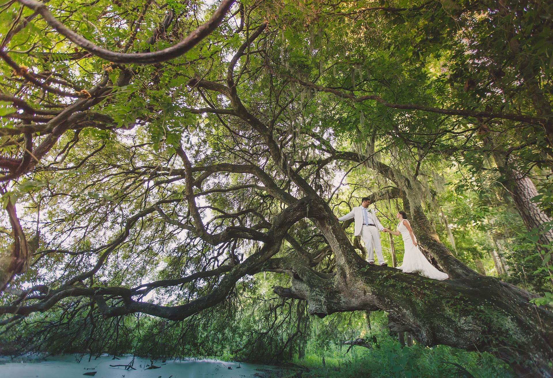 Over the river at Magnolia Plantation