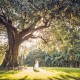 Magnolia Plantation Ancient Oak Wedding