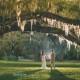 Magnolia Plantation Fall Wedding 001 (Sides 1-2)