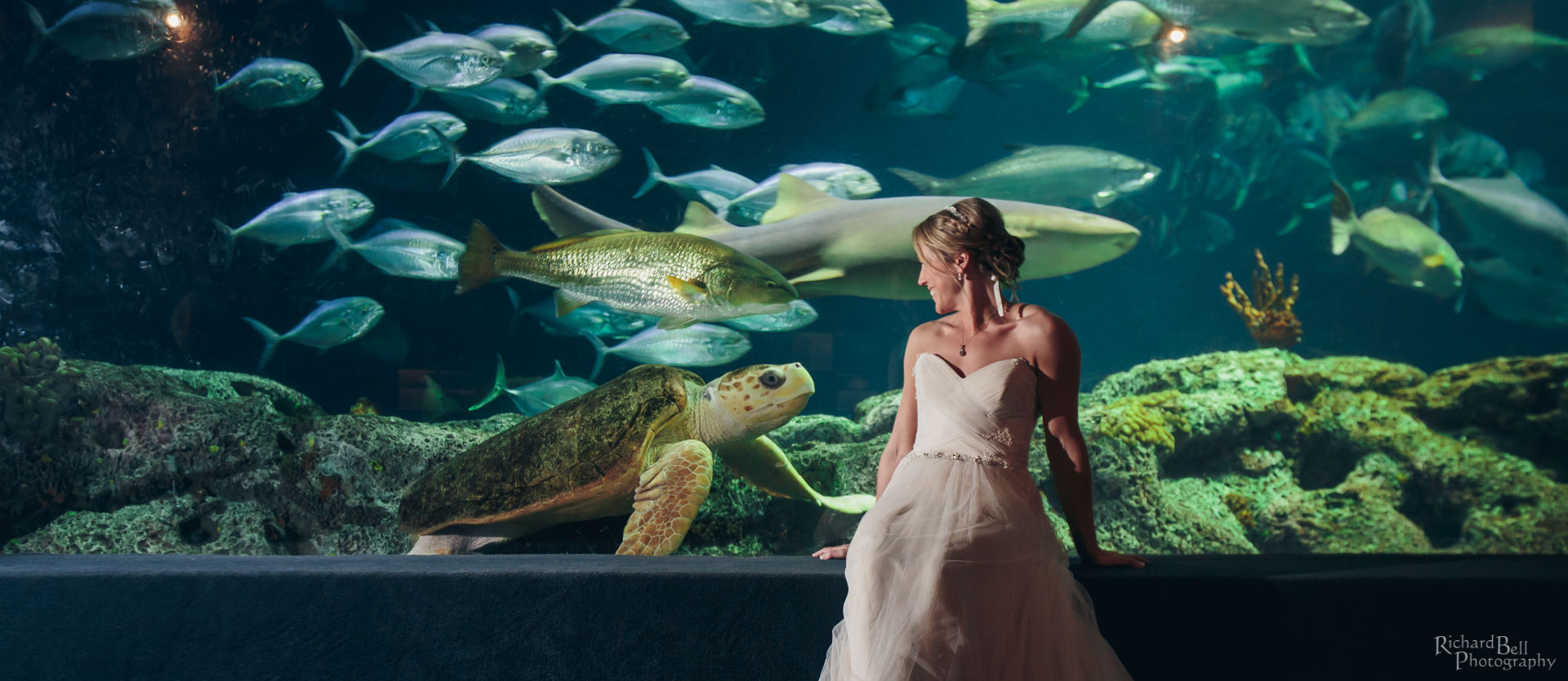 Bride with Turtle