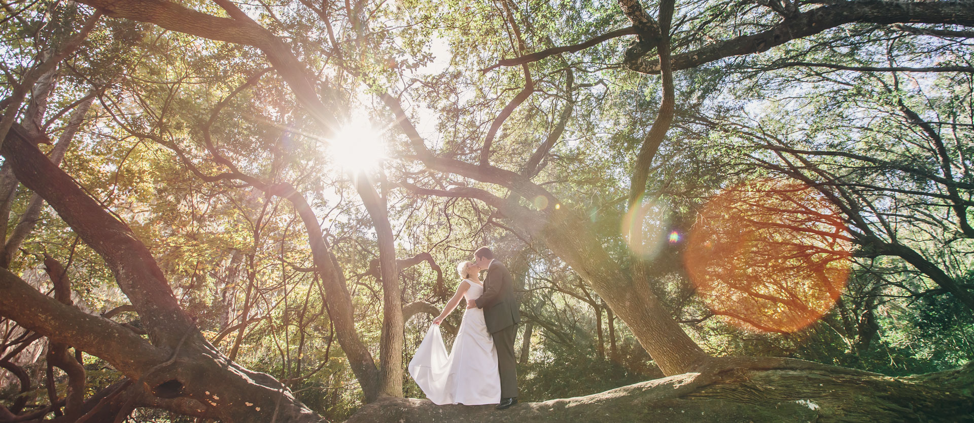 bride-and-groom-in-a-tree