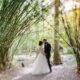 Magnolia Gardens Bamboo