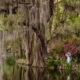 Swamp Gardens Wedding